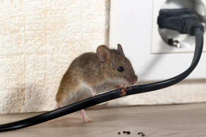 Pest Control in Ashtead, KT21. Call Now! 020 8166 9746