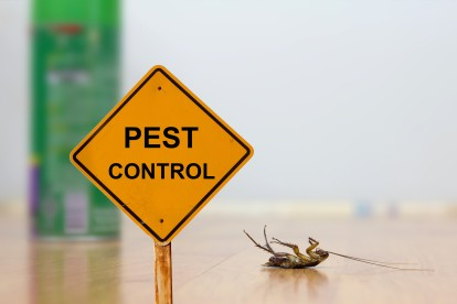 Pest Contol in Ashtead, KT21. Call Now 020 8166 9746