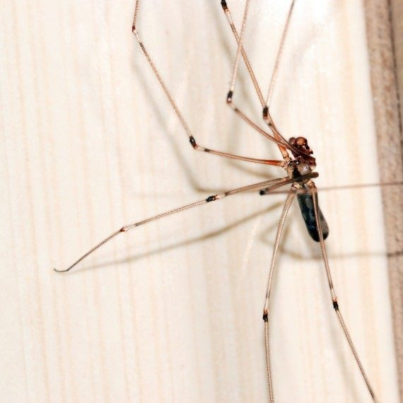 Spiders, Pest Control in Ashtead, KT21. Call Now! 020 8166 9746