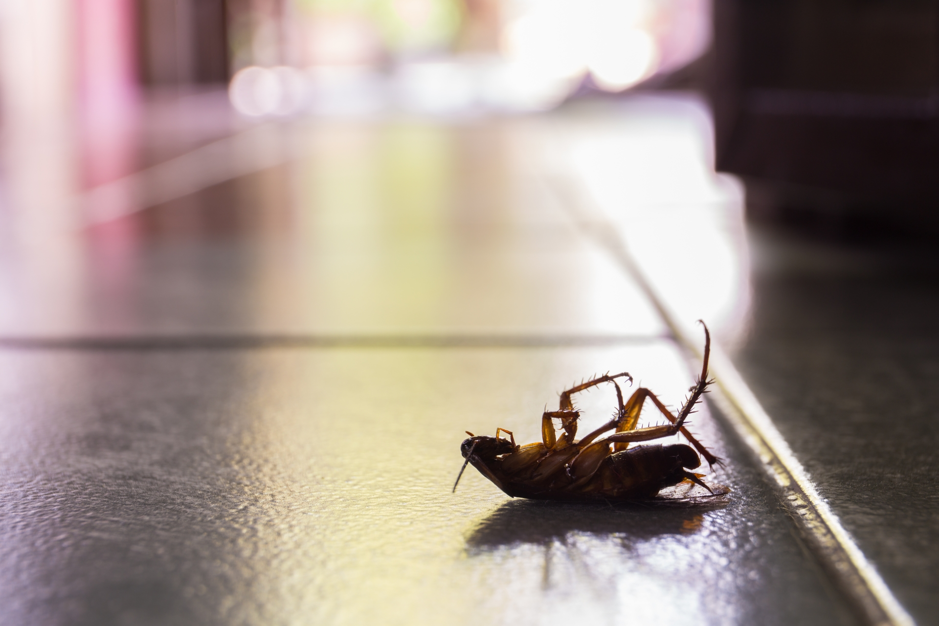 Cockroach Control, Pest Control in Ashtead, KT21. Call Now 020 8166 9746